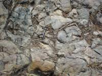 Lave basaltique silicifiée de 3.47 milliards d'années dont l'entière silicification a préservé les structures en coussins de forme arrondies résultant de l' émission sous-marine de la lave