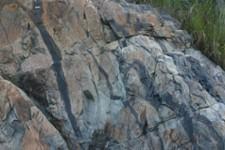 Lave basaltique silicifiée de 3.41 milliards d'années dont les formes en coussins caractéristiques de l'émission sous-marine ont été aplaties lors de la déformation de la roche après silicification. Les zones gris-bleues sont formées de silice (SiO2) pure